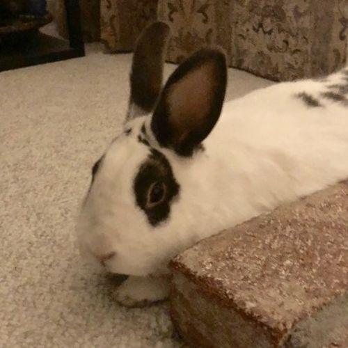 Pet Care Provider Nabeeha C's Profile Picture