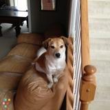 Dog Walker, Pet Sitter in Mason