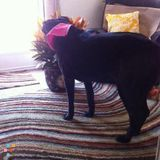 Dog Walker, Pet Sitter in Denton
