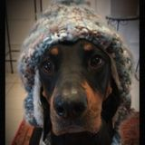 Dog Sitter/Walker/Boarder/Groomer here!