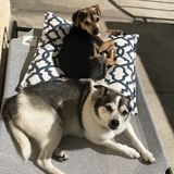 In-Home sitter needed for 2 dogs!