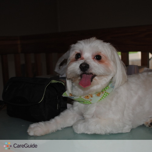 Pet Care Provider Julie F's Profile Picture