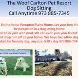 Dog Walker, Pet Sitter in Pompton Plains