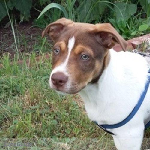 Pet Care Provider Angela Ruiz's Profile Picture