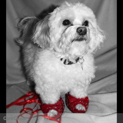 Pet Care Provider Ruby Slippers Pet Care,inc's Profile Picture