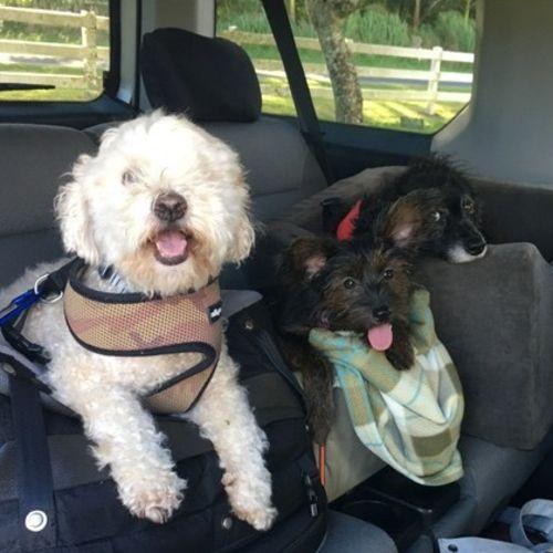 Pet Care Provider Cheri K's Profile Picture