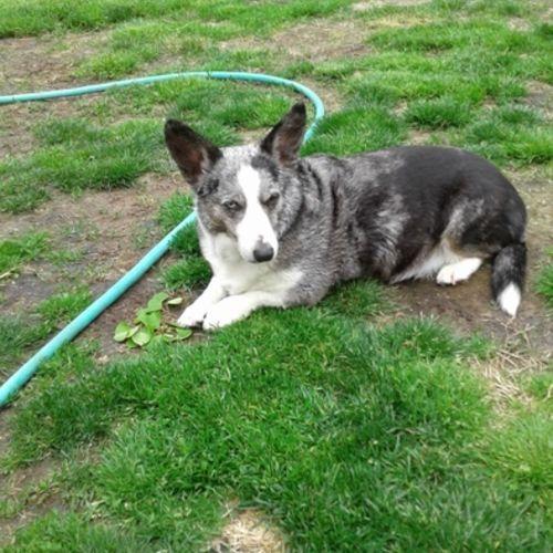 Pet Care Provider Dede H's Profile Picture