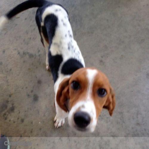 Pet Care Job Caroline Neuffer's Profile Picture