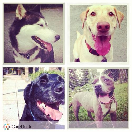 Pet Care Job Annie Wolfson's Profile Picture