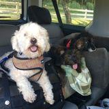 Dog Walker, Pet Sitter in Haiku