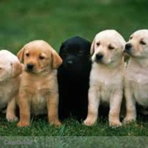 Pet Care Provider Jeremy Collins's Profile Picture