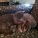 2 Female Spayed Cats Need Place To Stay