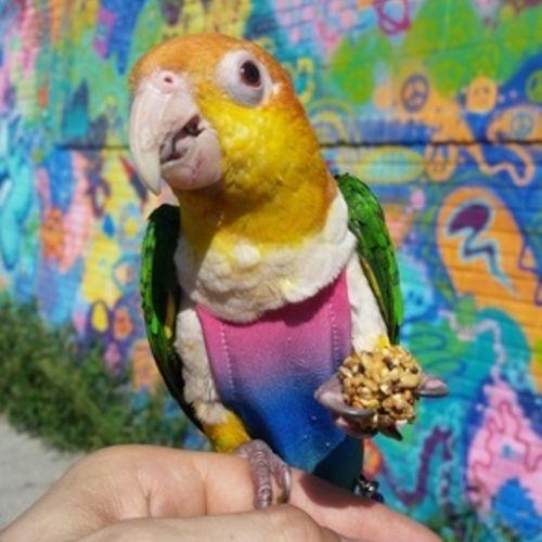 Pet Care Job Dawid Bo's Profile Picture