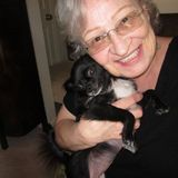 West Palm Beach, Companion provider, meals, light housekeeping. pet care. Love to help how ever I am able. I speak Hungarian.