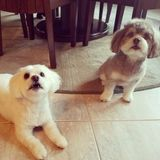 Looking for a trustworthy sitter who loves dogs!