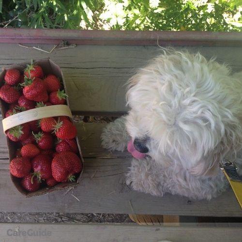 Pet Care Provider Olesea Fedoseev's Profile Picture