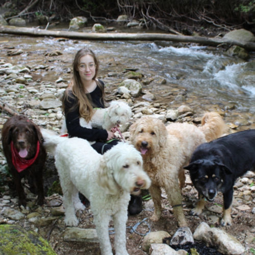 Seeking a Pet Care Provider Job in Waterloo.