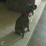 Dog Walker, Pet Sitter in Richland
