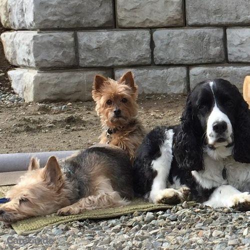 Pet Care Job Lisa Harris's Profile Picture