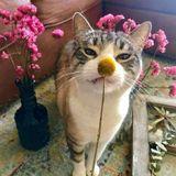 Grapevine w/ 2 fab cats