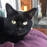 Allston Cat Sitter Needed