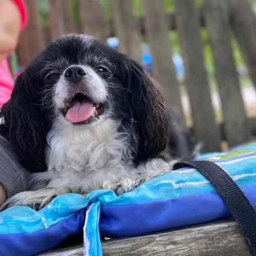 Pet Care Provider Janessa F's Profile Picture