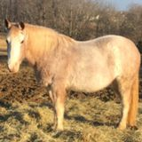 Need feeding help with 2 field boarded horses