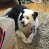 Experienced pet care individual