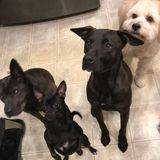 Dog Walker Available for Work in Montgomery