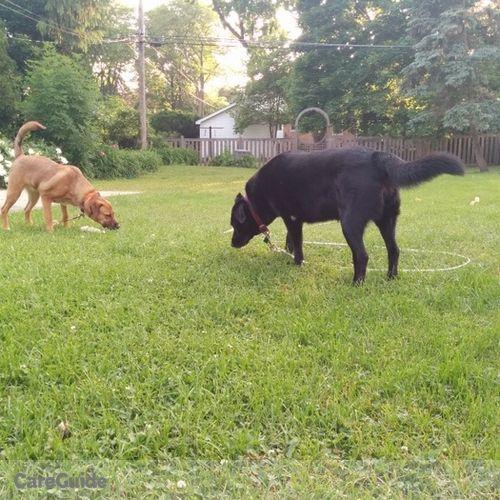 Pet Care Provider Jessie F's Profile Picture