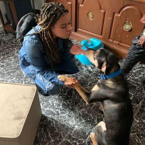 Pet Care Provider Krysta S's Profile Picture
