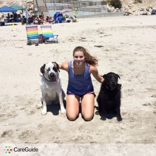 Experienced Dog Sitter and Walker, Love Dogs!