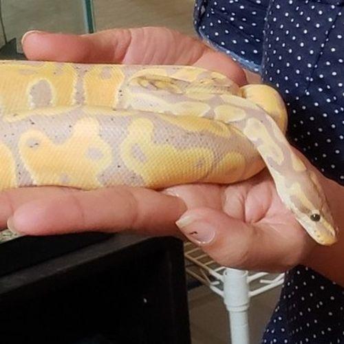 Pet Care Job Jessica F's Profile Picture