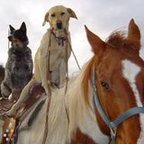 Dog Walker, Pet Sitter in Dover