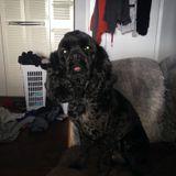 Dog Walker, Pet Sitter in Grande Prairie