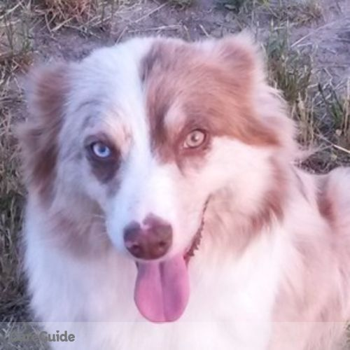 Pet Care Provider Brittany H's Profile Picture