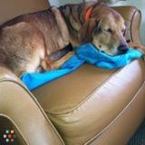 Dog Walker, Pet Sitter in Farmville
