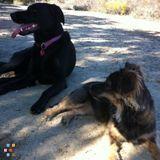 Loving Pet Sitter & Walker