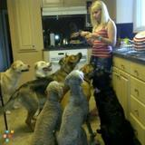 Dog Walker, Pet Sitter in Winnipeg