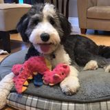 Nanny needed for busy family with adorable dog.