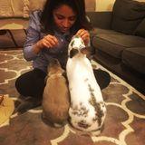 Super fun and Caring Pet sitter