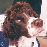 Dog Walker, Pet Sitter in Dracut