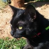 Johnson City Dog Walker/Pet Sitter/Animal Lover Seeking Being Hired