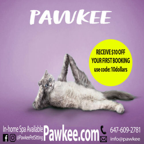 Pet Care Provider Pawkee P Gallery Image 1