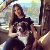 Salinas Dog Walker Looking For Work in California