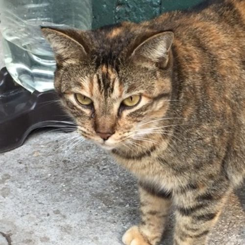 Pet Care Provider Armando Gort's Profile Picture