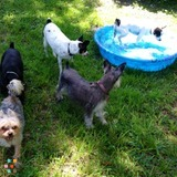 Pet Sitter in Riverview