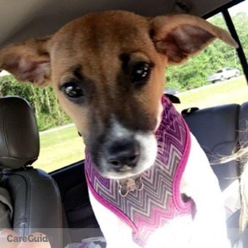 Pet Care Provider Alexis Battipaglia's Profile Picture