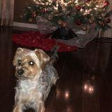Brampton Dog Sitter Interested In Work in Ontario