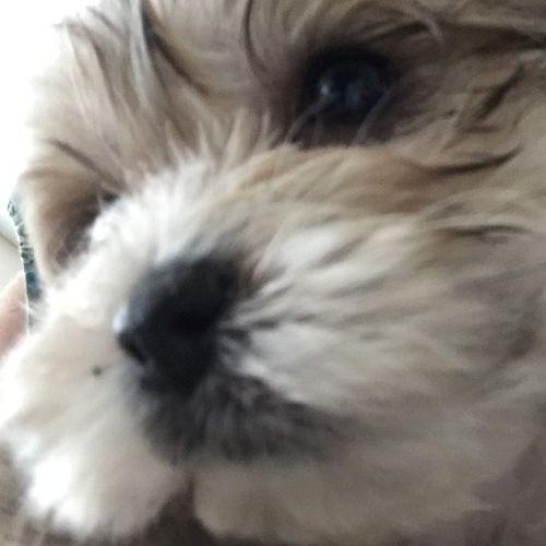 Pet Care Provider Rhonda Falcon's Profile Picture